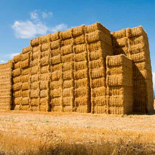 Answer HAY STACK