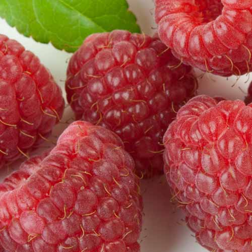 Answer RASPBERRIES