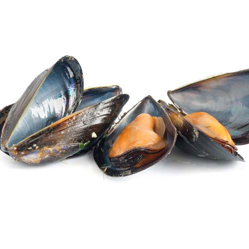 Answer MUSSELS