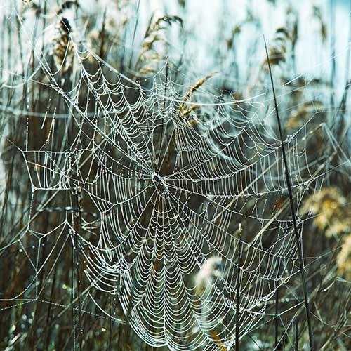 Answer SPIDERS WEB