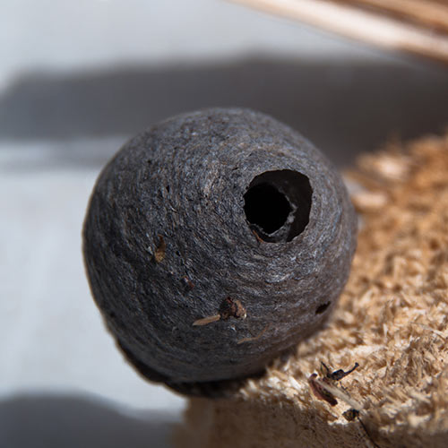 Answer WASPS NEST