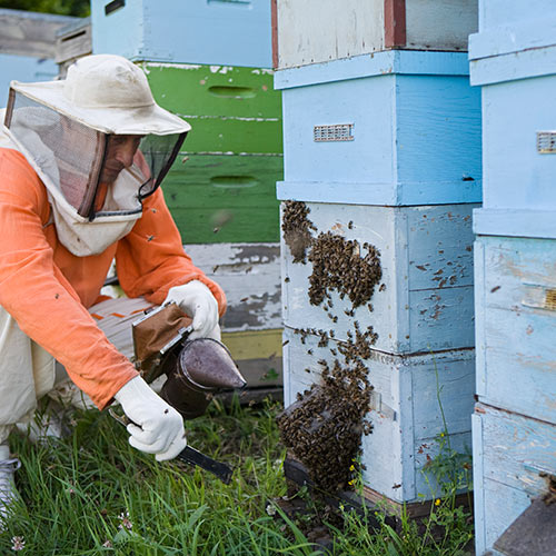 Answer APIARY
