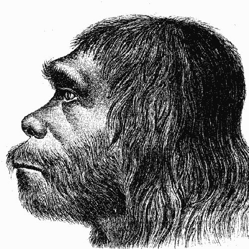 Answer NEANDERTHAL