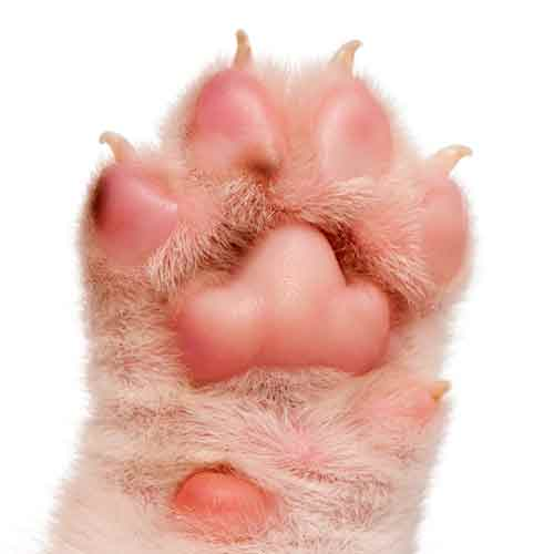 Answer PAW