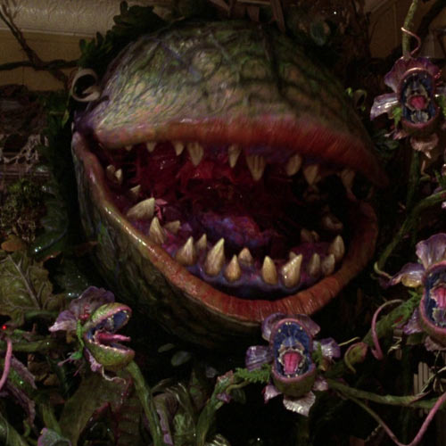 Answer AUDREY 2