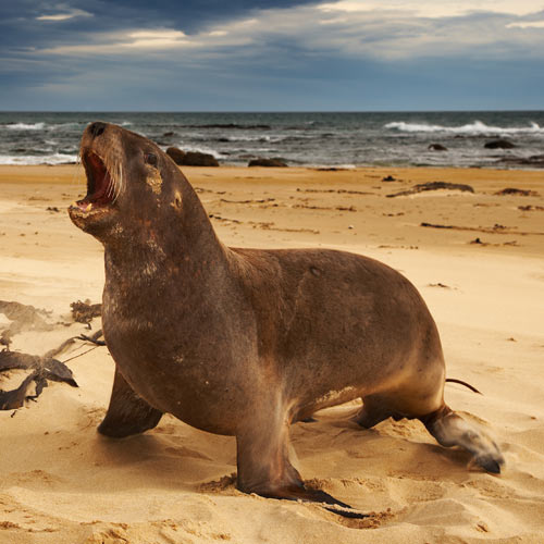Answer SEA LION