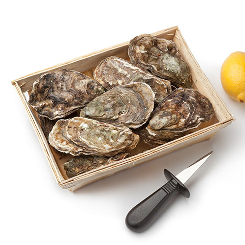 Answer OYSTERS