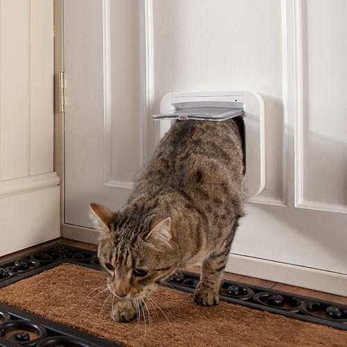 Answer CATFLAP