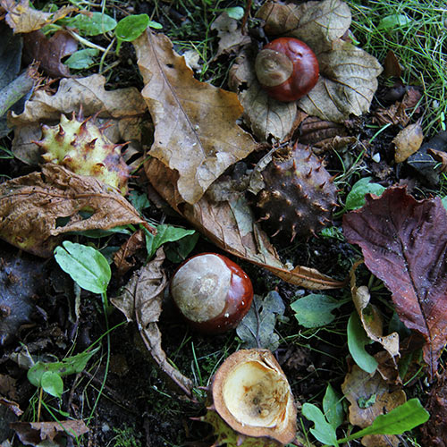 Answer CONKERS